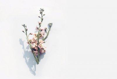 1920x890_Flower