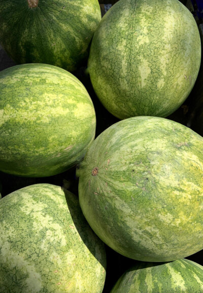 Kalahari-Melone