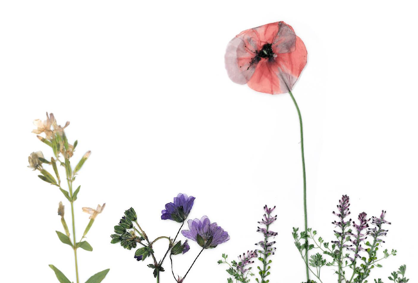 Biodiversität Blumenwiese